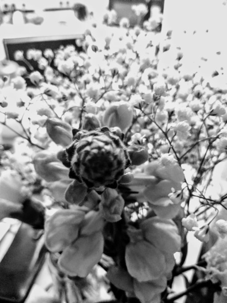 Flower Photography Black and White