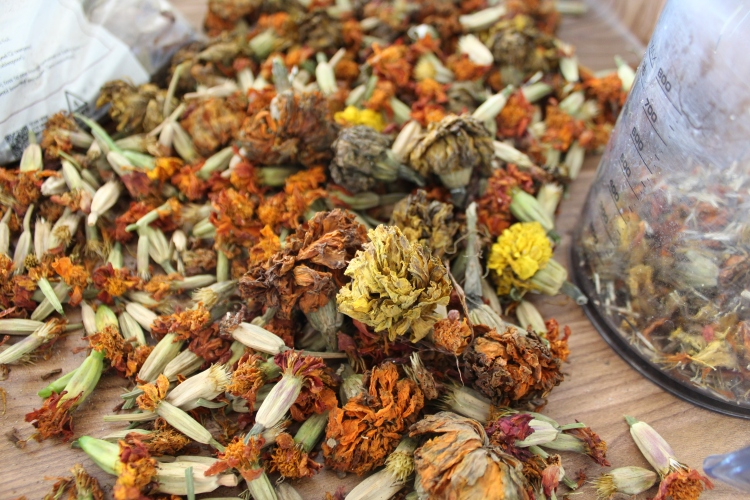 Dried Marigolds