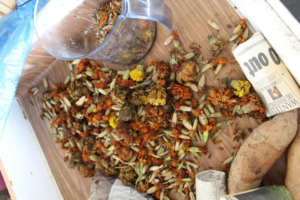 Dried marigold flowers